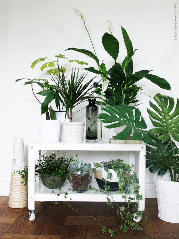 green-plants-grouped-together