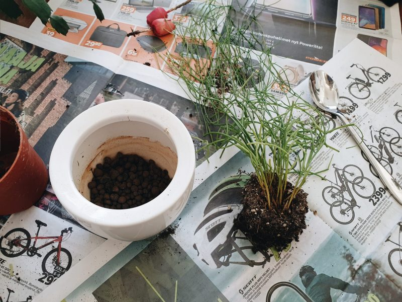 Huonekasvien keväthoidon abc
