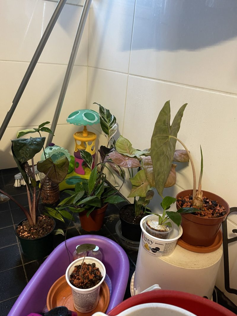 kinastelua kasveista